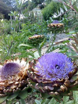 they taste good and look even better